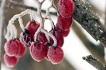 Arctic Cranberries